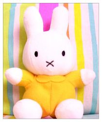 Miffy Photo 01 by Miffy-fans