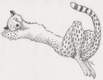 Cheetah Sketch by mattyhex