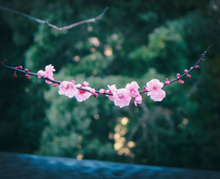 Blossom 2 by cindywebbphotography