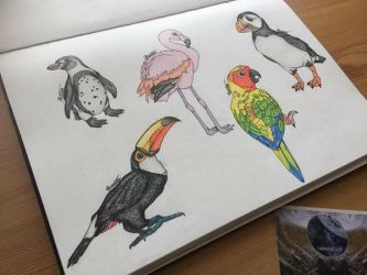 Trendy Bird Coloured Pencil Drawing Page by Identra-Doodles