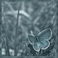 'Blue' in blue by Irena-N-Photography