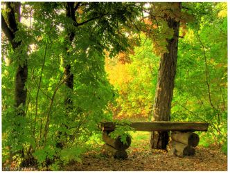 Autumn Forest by selley