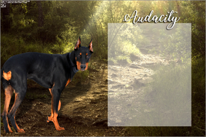 AUDACITY's Doberman layout by magsislove