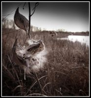 got milk weed? by xedgerx