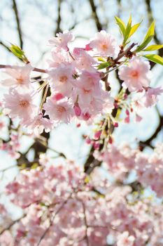 Flowers of Spring by cd2