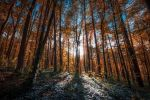 October Forest II by third-one