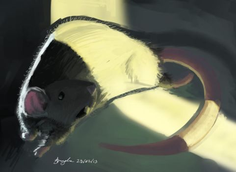 mouse by Rafael-angelo