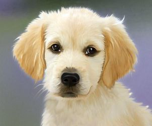 Puppy-Love!! by Dog-Lovers--Club