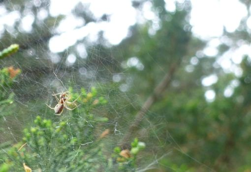 Untitled (Spider #2) by jeuxsansfrontieres