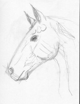 Thoroughbred Headstudy by HadesBabe