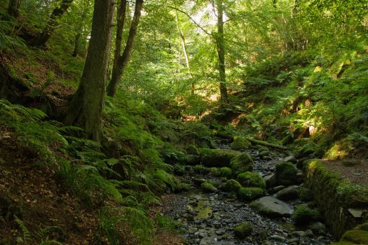 High Force Woodland by parallel-pam