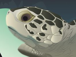 Turtle closeup illustrator by lille-cp