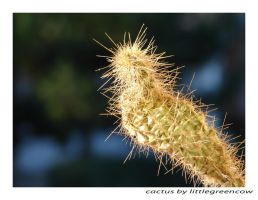cactus by littlegreencow