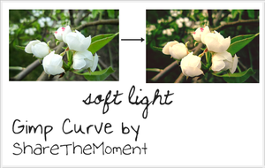 Gimp Curve - Soft Light by ShareTheMoment