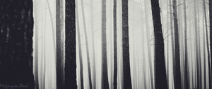 Deep Dark Forest by mpmgosia