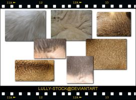 FUR- MAINLY CAT FUR by LULLY-STOCK
