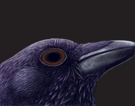 WIP Raven Eye by Wolf-Daughter