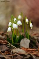beginning of spring by Alouette-Photos