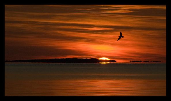 Bird and Sundown by aare