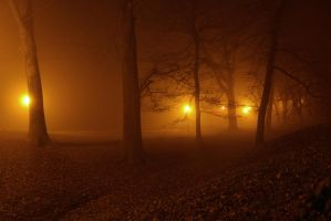 Forest at night by darkoantolkovic