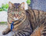 A cool cat with a bow tie by FrancescaDelfino