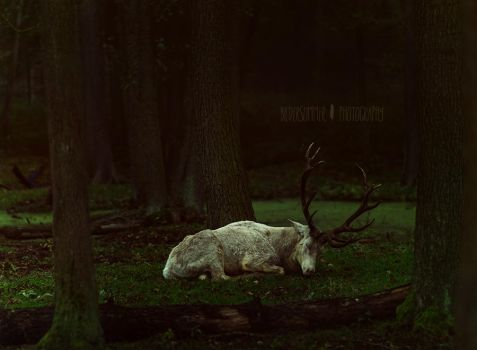 | the deer which escaped from a dark fairytale by Atreja