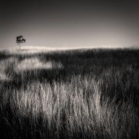 Tree and grass... II by denis2