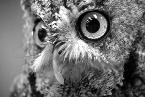 Owl-Eyed by Arquerite