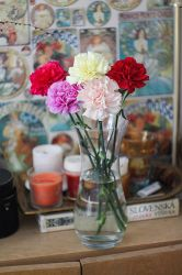carnations by grezelle