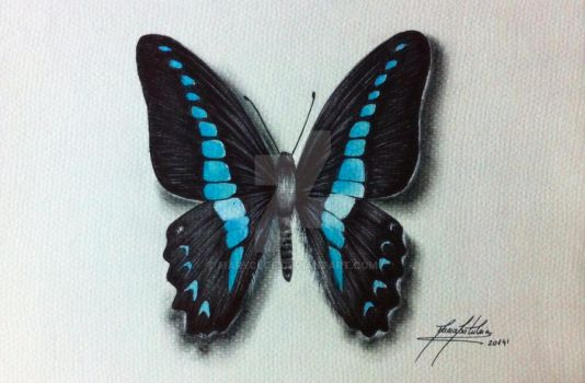 Graphium Sarpedon butterfly by MaryCloe