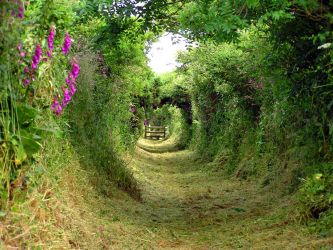 A country path by Chris-Brown