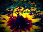 Summer Flower 2012 - 20 by Ingnition