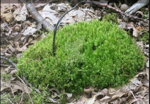 Stick in the Moss