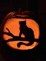 Kitty Pumpkin by DarkWindCimba