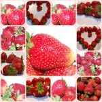 Strawberry Love by barefootphotos