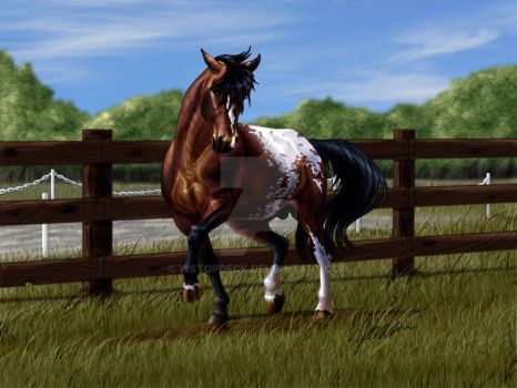Bay Appaloosa for Fire N Ash by WSTopDeck
