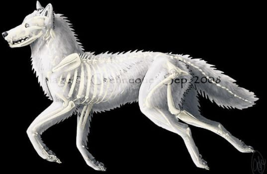 Skeleton Ghost Wolf by chenneoue