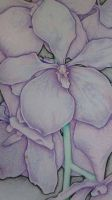 orchids in colored pencils by Alexandra555