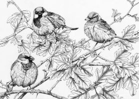 House Sparrows by LynneHendersonArt