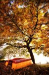 In Autumn by MarcoHeisler