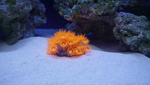 Coral by Marno78