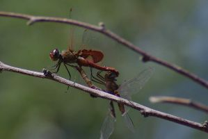 Red Saddlebags by PatGoltz