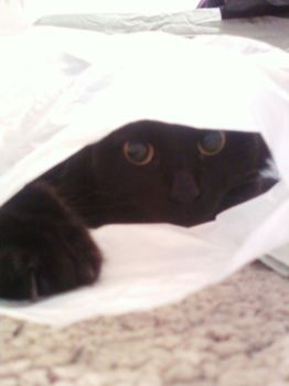 Bag cat by room237