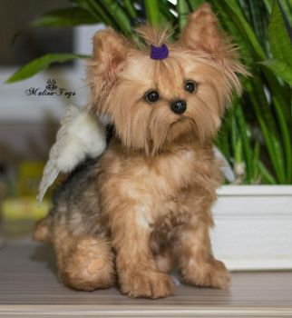 Poseable toy commission Yorkshire Terrier by MalinaToys