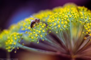 Bee the Best by topperGfx