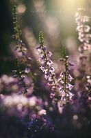 Just Heather... by Justine1985