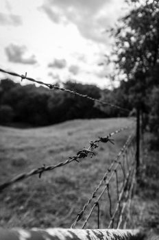 A Portrait of Barbed Wire by Salemburn