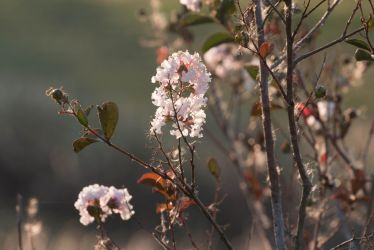 Pink flowers in the evening by Ankh-Infinitus