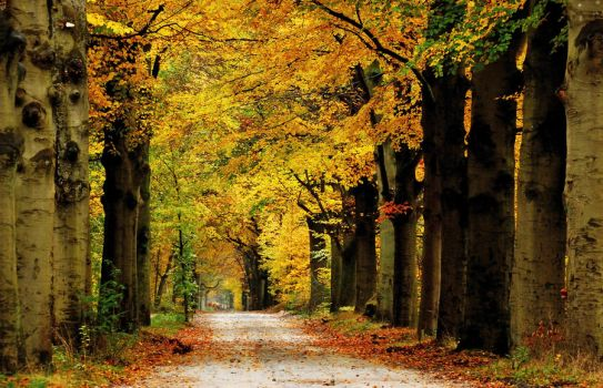 A colourful autumnal memory 2012 by jchanders