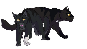 Wolfpaw and Nightpaw by Dawnheart101